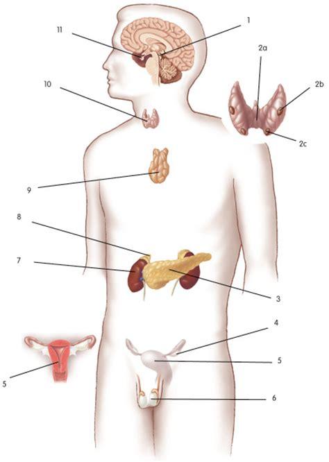 endocrineans biologyisc