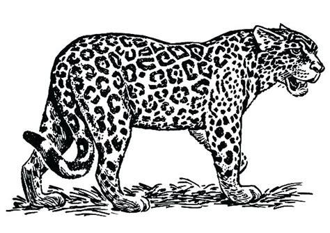jaguar coloring pages printablecoloringpagekidsinfo