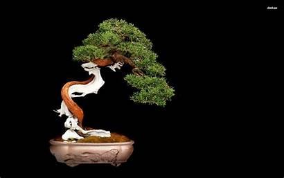 Bonsai Tree Wallpapers Desktop Nature Backgrounds Downloaded