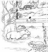 Zoo Coloring Animal Printable Lap Nature sketch template