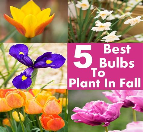 5 best bulbs to plant in fall diycozyworld home