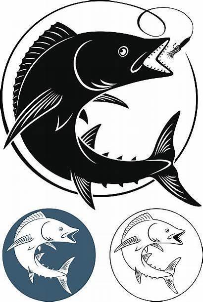 King Mackerel Vector Fish Illustration Wahoo Clip
