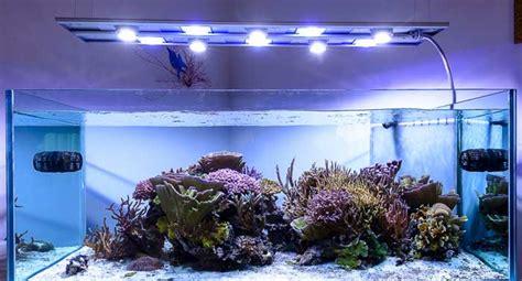 illuminazione per acquari illuminazione per acquario migliori lade e plafoniere