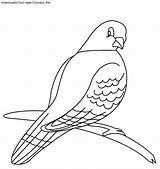 Pigeon Coloring Printable Animals Preschool Crafts sketch template