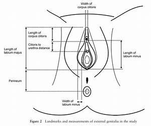 Is My Vulva Normal  Anatomy  Variation  And Pictures