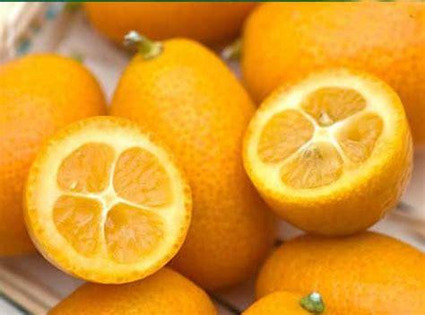 Kumquat Images Kumquat More Photos
