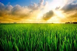 Rice field 02 by garki on DeviantArt