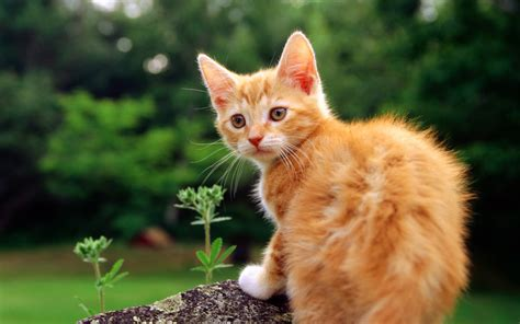 55 Beautiful【cats】animal Facts With Photo Hd Wallpapers