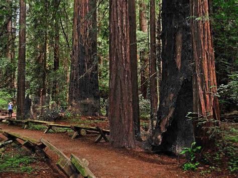 visit california redwoods sonomacountycom