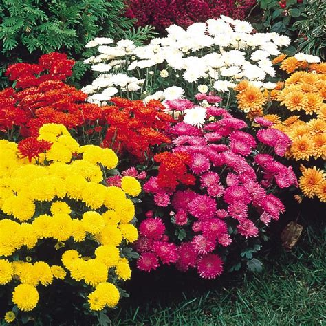 the best fall blooming flowers for your yard