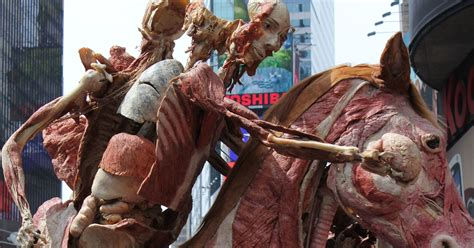horse horseman skinless exhibit york story