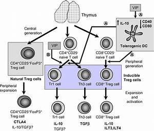P Generates Various Populations Of Regulatory T Cells
