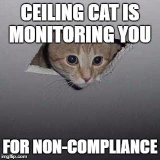 Ceiling Cat Meme Ceiling Cat Meme Imgflip
