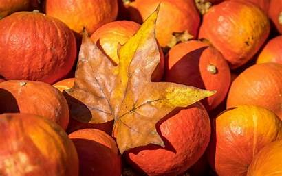 Harvest Autumn Halloween Pumpkin Desktop Wallpapers Resolution