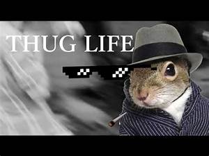 Thug Life Animal Meme | www.pixshark.com - Images ...