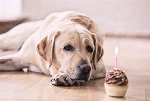 Hunde Größe Berechnen : hundejahre in menschenjahre umrechnen und umgekehrt online rechner ~ Themetempest.com Abrechnung