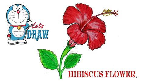 How To Draw A China Rose Hibiscus Flower Step By Step