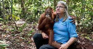 Pin by Gail Malec on Orangutan | Pinterest