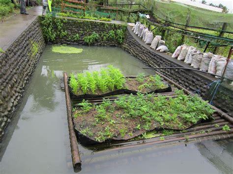 Image Of Backyard Tilapia Farming