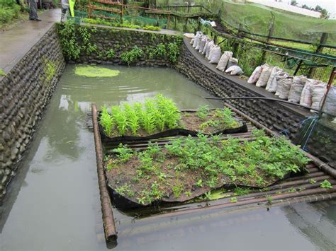 Image Of Backyard Tilapia Farming — Design & Ideas How