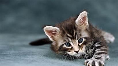 Cat Tablets 2560 1440 Wallpapers Wiki Pixelstalk