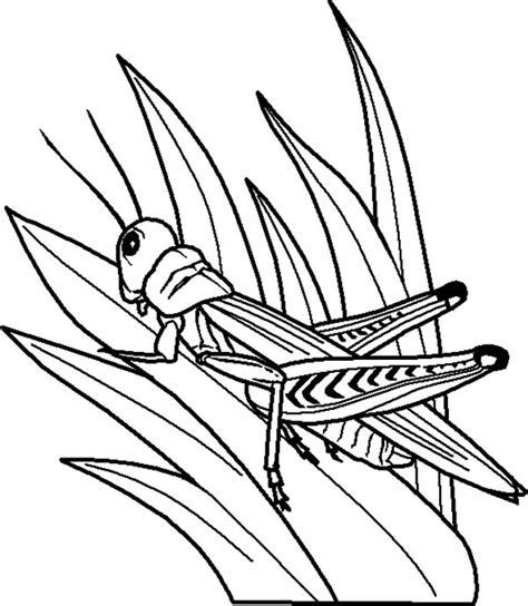 Coloring Grass by Grasshopper Perch On Grass Coloring Pages Color