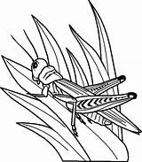 Grass Coloring Grasshopper Pages Drawing Perch Grasshoppers Outline Garden Bug Printable Getdrawings Drawings Flower Predator Bugs Items Activities Summer Getcolorings sketch template