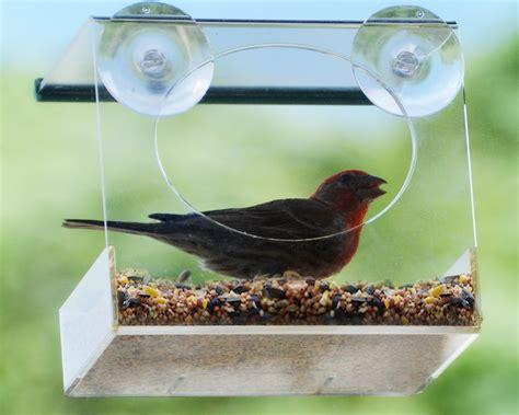 window bird feeder red earth naturals