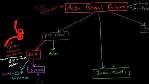 Pathophysiology Of Acute Renal Failure