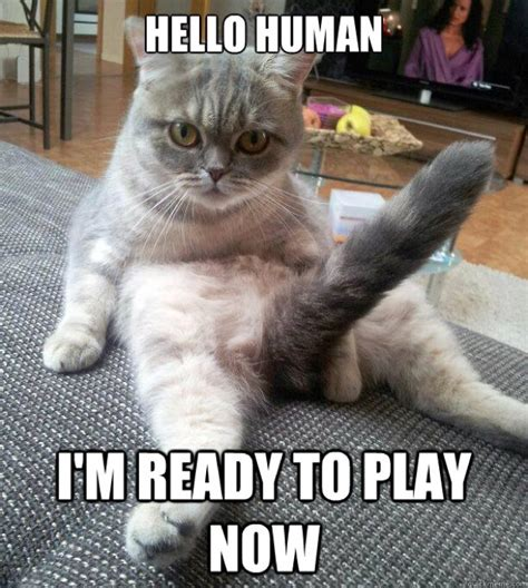 Humans Meme - image gallery human cat meme
