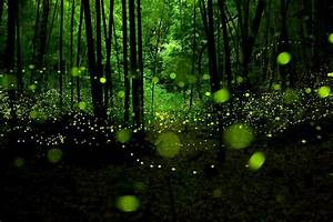 Tapete Die Im Dunkeln Leuchtet : biolumineszenz wenn die natur im dunkeln leuchtet tiny dream insides natur gl hw rmchen wald ~ Frokenaadalensverden.com Haus und Dekorationen