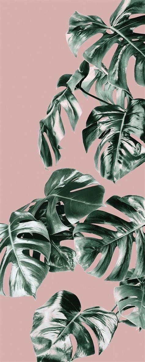 pin  meila azura  estetik   pink wallpaper