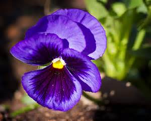 Deep Blue Purple Flowers