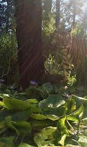 rates   Jukani Wildlife Sanctuary, Plettenberg Bay, South ...