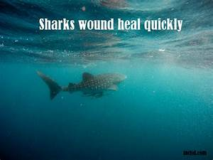 Shark Facts Interesting And Fun Facts About Sharks 2019