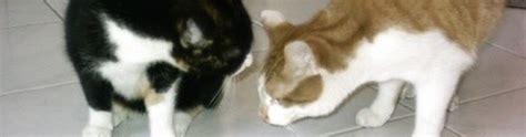 Wurmkur Katze Nacken