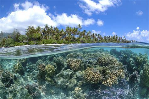fringing reefs barrier reefs atolls patch reefs