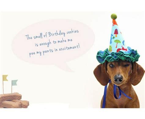 Dachshund Birthday Meme - happy birthday memes dog wishesgreeting