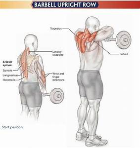 Upright barbell row | Workout Charts | Pinterest | Upright ...