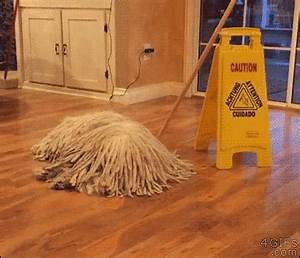 Mop Dog GIFs - Find & Share on GIPHY