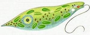 Protista - Creatures Great and Small