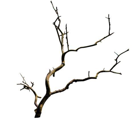 Branch PNG Transparent Branch.PNG Images.