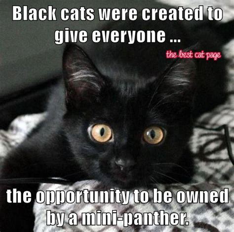 Unbreeds The Panther Way Of Cats Blog