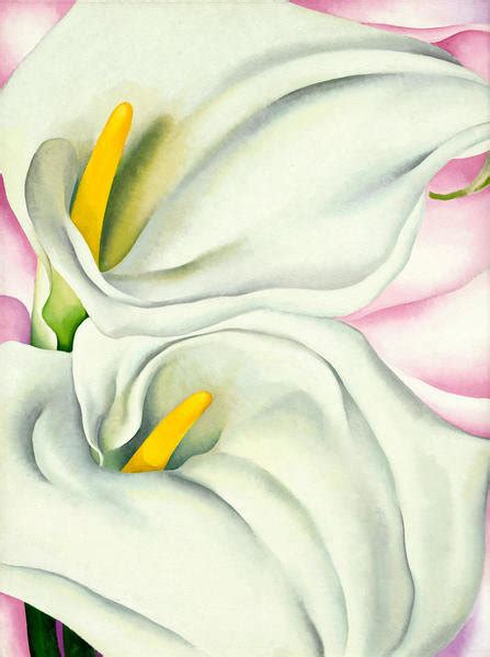 calla lilies  pink   georgia okeeffe paper  canvas print philadelphia