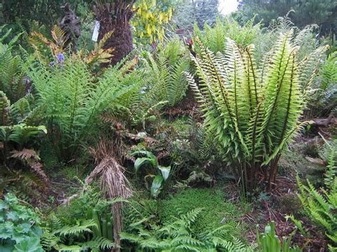 ferns in the garden oak ridge shrubbery landscaping inc made in the shade