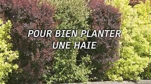 Quel Arbre Planter Près D Une Maison : la plantation d 39 une haie ~ Dode.kayakingforconservation.com Idées de Décoration