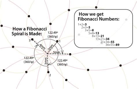 Thegoldenratio Captivating Fibonacci Sequence