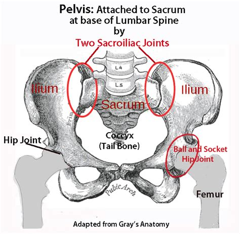 Human muscles·july 18, 2016august 19, 2016. The Rectus Femoris and Lower Back Pain