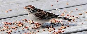 Vogelfutter Selbst Herstellen : vogelfutter selber machen ganz einfach gr gott ~ Orissabook.com Haus und Dekorationen