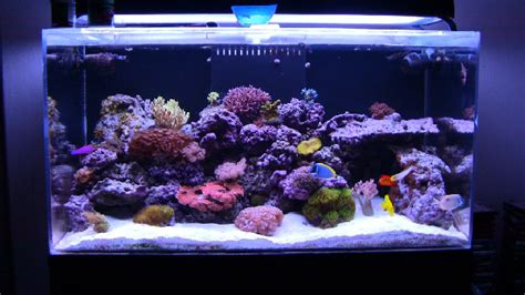 200 gallon water tank mad hatter 39 s reef saltwater aquarium care and information